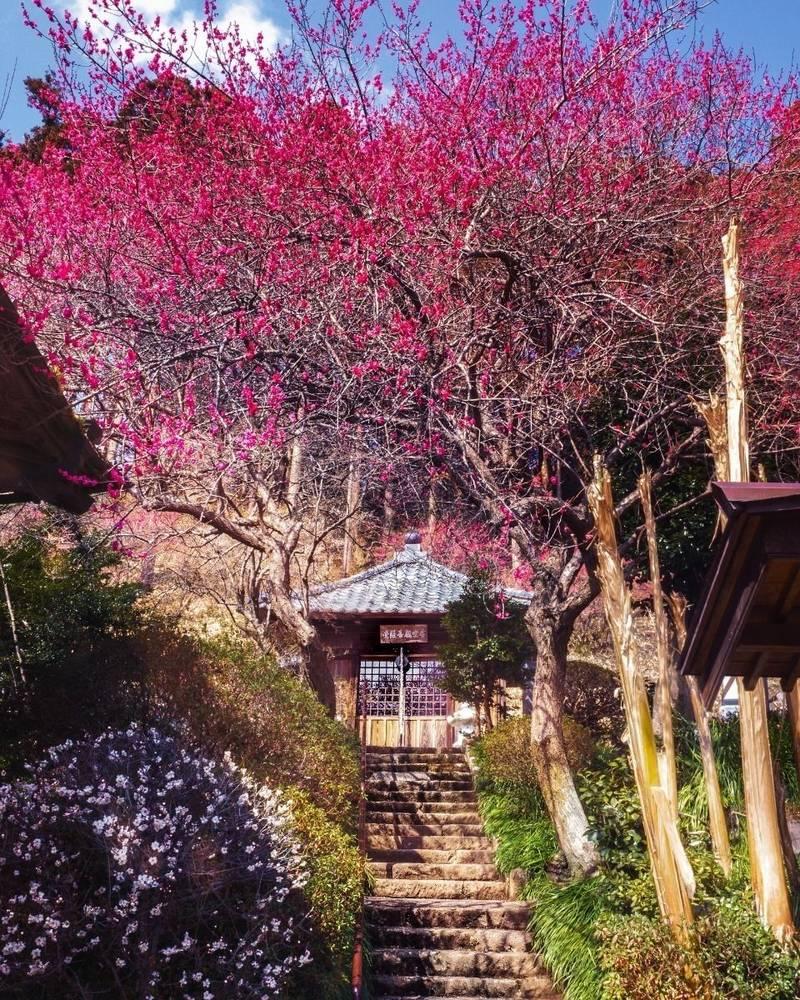 梅林寺 - いわき市/福島県 の見どころ。菩薩堂と紅白... by シエル | Omairi(おまいり)