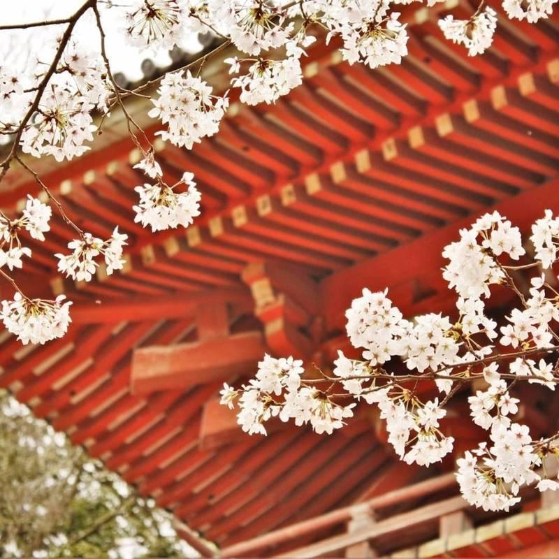 醍醐寺 - 京都市/京都府 の見どころ。醍醐寺の桜。お... by nana   Omairi(おまいり)