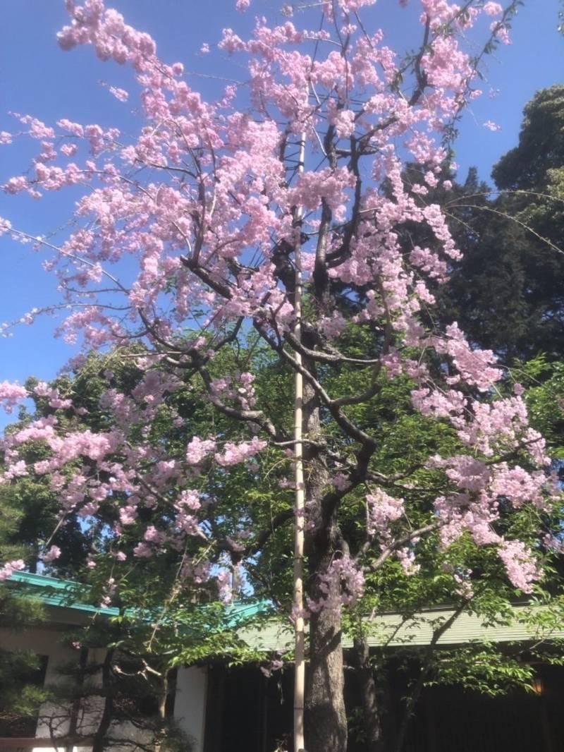 代々木八幡宮 - 渋谷区/東京都 の立ち寄り。代々木八... by カタリア | Omairi(おまいり)
