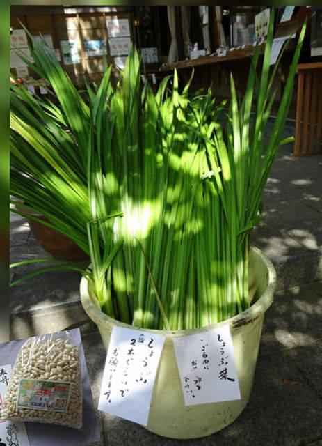 王子神社(猫神さん) - 徳島市/徳島県 の授与品。お... by 碧藤 | Omairi(おまいり)
