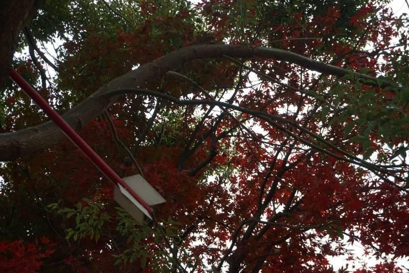 三輪神社 - 名古屋市/愛知県 の見どころ。三輪神社さ... by シャバーニ原西 | Omairi(おまいり)