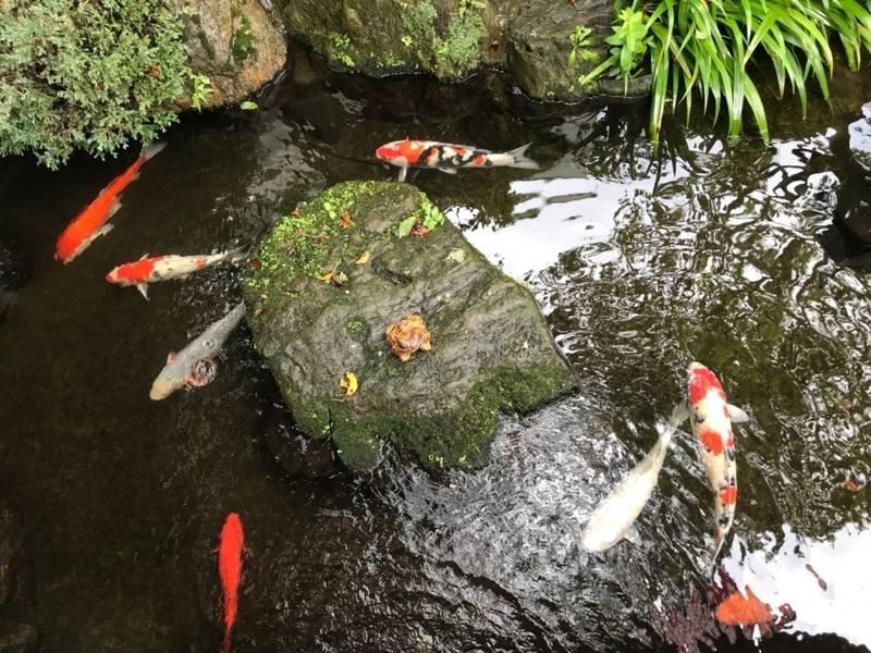 桜ヶ池不動尊 - 中野区/東京都 の見どころ。こちらの... by はなこ | Omairi(おまいり)