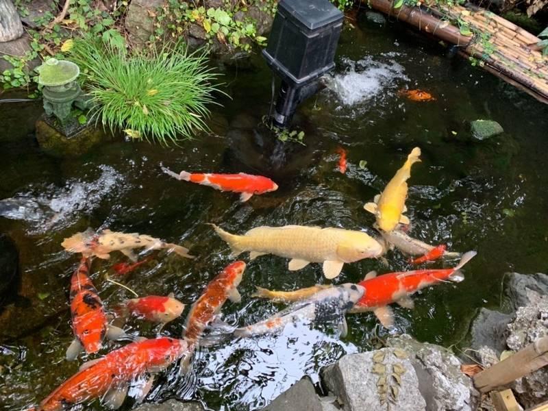 吉原神社 - 台東区/東京都 の見どころ。大きな鯉たち... by yuco | Omairi(おまいり)