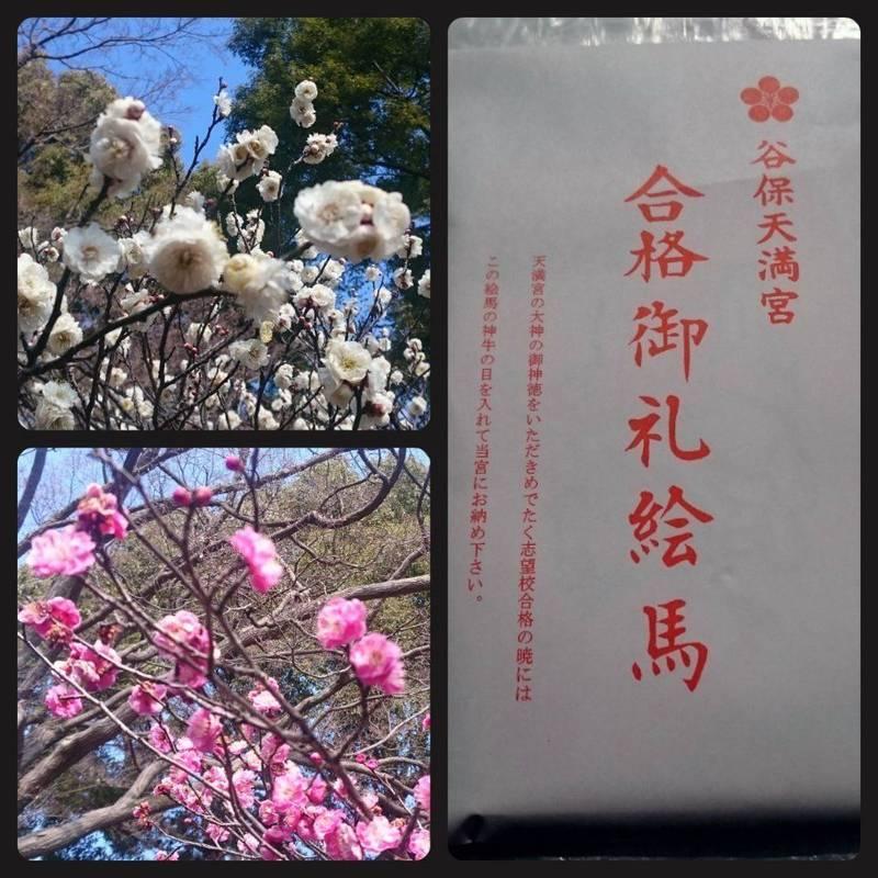 谷保天満宮 - 国立市/東京都 の授与品。梅が咲き始め... by えぬ   Omairi(おまいり)