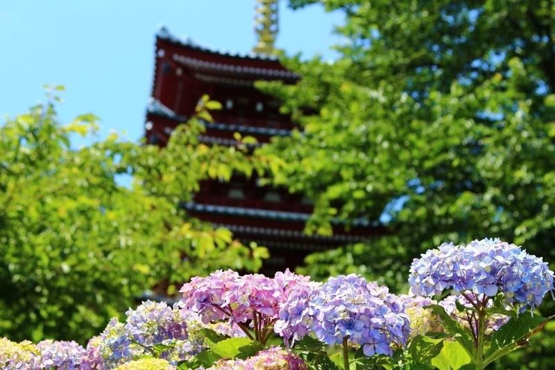本土寺 - 松戸市/千葉県 の見どころ。紫陽花で有名な... by ずんくま | Omairi(おまいり)