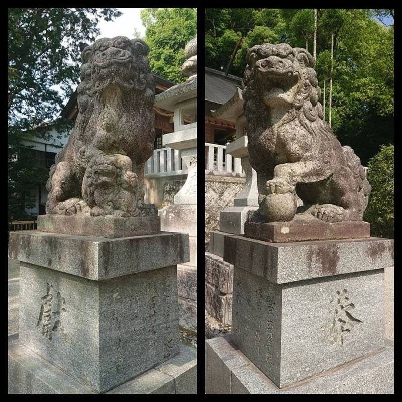 黒髪神社 - 武雄市/佐賀県 の見どころ。狛犬さんたち... by 花菜太   Omairi(おまいり)