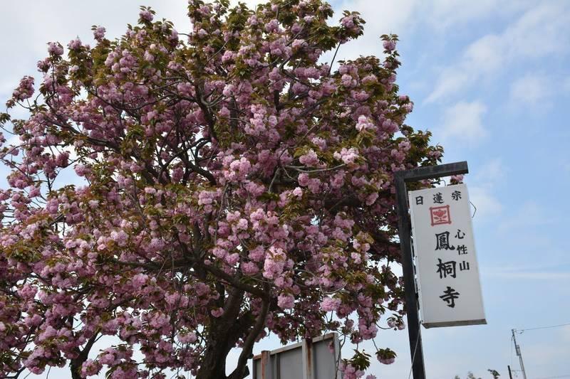 鳳桐寺 - 古河市/茨城県 の見どころ。入口には、大き... by 信行 | Omairi(おまいり)