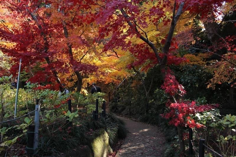 本土寺 - 松戸市/千葉県 の見どころ。赤や黄色に紅葉... by ずんくま | Omairi(おまいり)