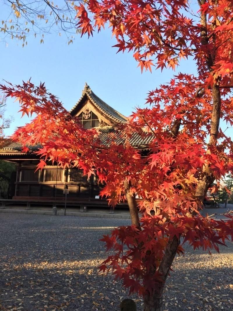 三十三間堂 (蓮華王院本堂) - 京都市/京都府 の見... by 金魚8 | Omairi(おまいり)