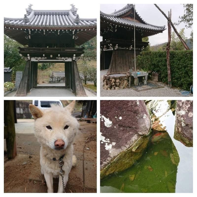 阿弥陀寺 - さぬき市/香川県 の見どころ。庭も綺麗に... by さくら | Omairi(おまいり)
