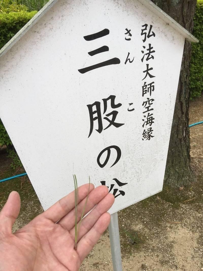 大聖寺 - 土浦市/茨城県 の見どころ。高野山ではなか... by janmasa   Omairi(おまいり)