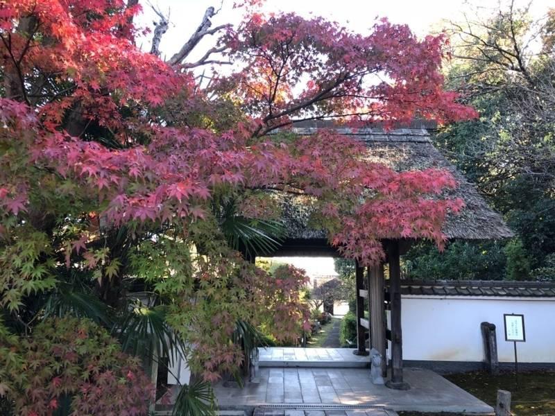 大聖寺 - 土浦市/茨城県 の見どころ。紅葉が綺麗でし... by あさみん | Omairi(おまいり)