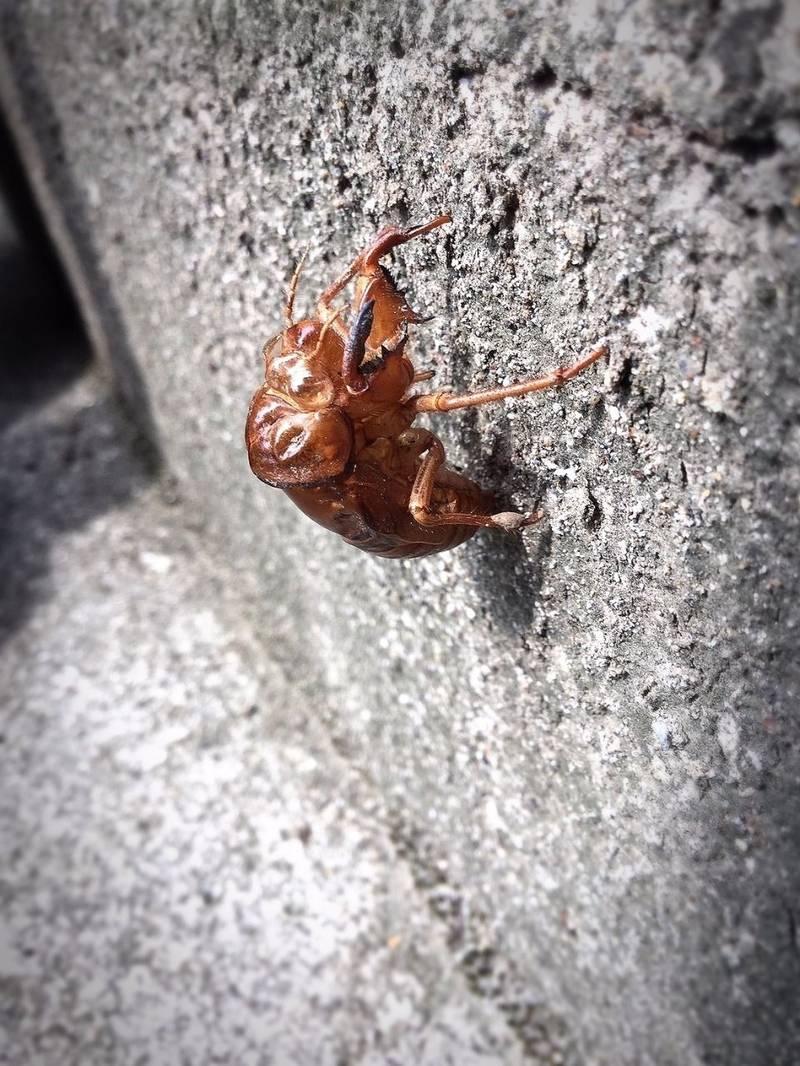 洲崎神社 - 館山市/千葉県 の立ち寄り。階段をのぼっ... by ユキンタロー(•ө•)♡ | Omairi(おまいり)